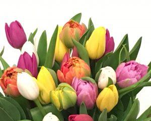Įvairių spalvų tulpės (vnt.)